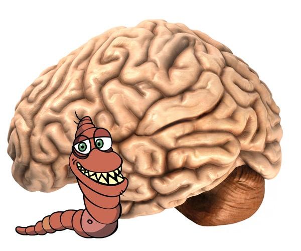 brain-tapeworm